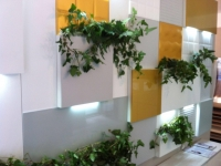 Punct decorativ plante de interior